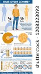 genome infographics. what is... | Shutterstock .eps vector #1208323093