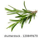 Rosemary Over White
