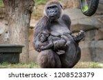 Mother Gorilla Holding Her Bab...
