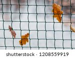 yellow maple leaves entangled... | Shutterstock . vector #1208559919