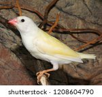 beutiful tropic bird  lady... | Shutterstock . vector #1208604790