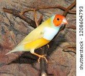 beutiful tropic bird  lady... | Shutterstock . vector #1208604793