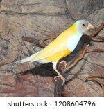 beutiful tropic bird  lady... | Shutterstock . vector #1208604796