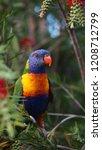 lorikeet colorful bird australia | Shutterstock . vector #1208712799