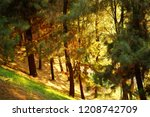 the sun shines through the pine ...   Shutterstock . vector #1208742709