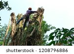 an arborist is chunking down a... | Shutterstock . vector #1208796886