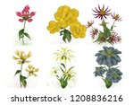 2d illustration. decorative... | Shutterstock . vector #1208836216