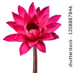 red lotus flower isolated on... | Shutterstock . vector #1208887846