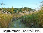 a leisurely walkway with reeds...   Shutterstock . vector #1208930146