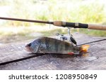 freshwater perch and fishing... | Shutterstock . vector #1208950849