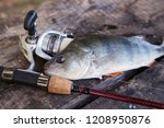 close up view of freshwater... | Shutterstock . vector #1208950876
