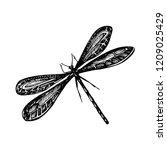 raster version. black odonata... | Shutterstock . vector #1209025429