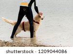 rescue dog  training for the... | Shutterstock . vector #1209044086