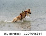 rescue dog  training for the... | Shutterstock . vector #1209046969