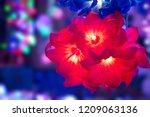 diwali led lights | Shutterstock . vector #1209063136