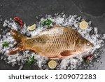 fresh raw mirror carp fish with ... | Shutterstock . vector #1209072283