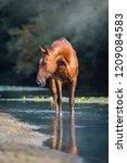 Sorrel Horse In Blue River...