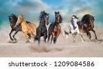 horses run gallop free in... | Shutterstock . vector #1209084586
