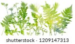 watercolor template with leaves ... | Shutterstock . vector #1209147313