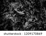 top view leaves fern bushes in... | Shutterstock . vector #1209170869