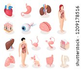 human organs isometric icons... | Shutterstock .eps vector #1209178516