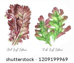 hand drawn watercolor salad... | Shutterstock . vector #1209199969