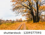 meadow in the floodplain of the ...   Shutterstock . vector #1209377593