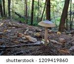 grey and brown mushroom closeup ... | Shutterstock . vector #1209419860