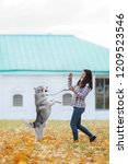 Stock photo girl plays with her husky dog in fallen autumn leaves 1209523546