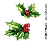 ilex  holly  branches with... | Shutterstock .eps vector #1209551320