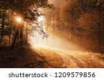 sunrise at the empty forest... | Shutterstock . vector #1209579856