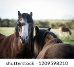 two horses close together  | Shutterstock . vector #1209598210