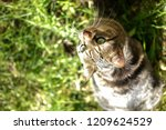 close up tabby cat with... | Shutterstock . vector #1209624529