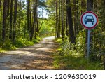 road in the forest with a road... | Shutterstock . vector #1209630019
