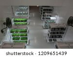 clone cannabis plants in a... | Shutterstock . vector #1209651439