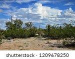 the sonora desert in central... | Shutterstock . vector #1209678250