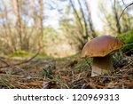 mushroom | Shutterstock . vector #120969313
