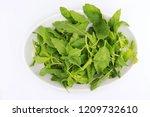 close up of fresh green lea ... | Shutterstock . vector #1209732610