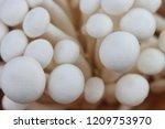 close up top view of mushroom... | Shutterstock . vector #1209753970