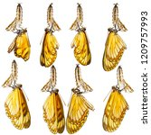 emerged from pupa of yellow... | Shutterstock . vector #1209757993