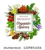 spices and herbs of organic... | Shutterstock .eps vector #1209851656