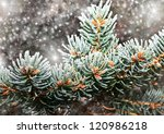 Fir Tree Branch In Snow For Ne...