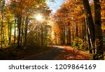 road in autumn forest | Shutterstock . vector #1209864169