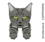 a grey colored wildcat lives... | Shutterstock .eps vector #1209934096