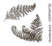 vector fern set hand drawn...   Shutterstock .eps vector #1209934720