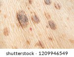 freckles on the skin and ... | Shutterstock . vector #1209946549
