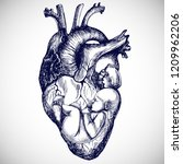baby in your heart. hand drawn... | Shutterstock .eps vector #1209962206