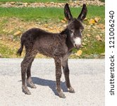 Donkey Calf