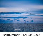 whale is swimming in the gulf...   Shutterstock . vector #1210343650