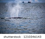 whale is swimming in the gulf...   Shutterstock . vector #1210346143